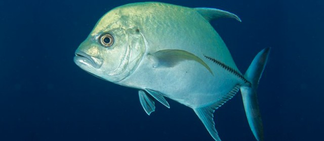 July Fishing Forecast: Port Canaveral